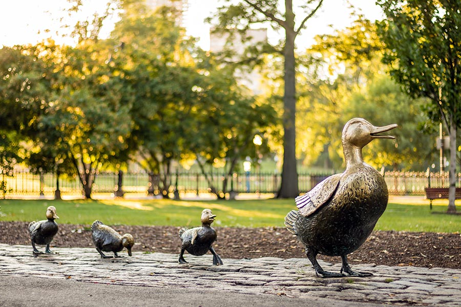 Contact Us - Bronze Duck Statues in Boston Common, the Ducklings Trailing Behind Their Mother, Trees in the Background
